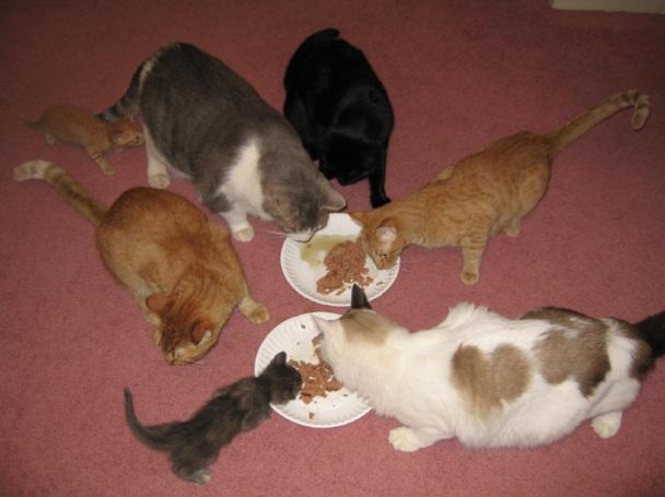 sixcats.jpg