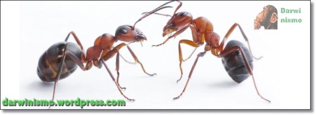 Formigas Faladoras