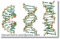 O ADN