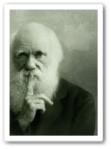 Darwin Shiu