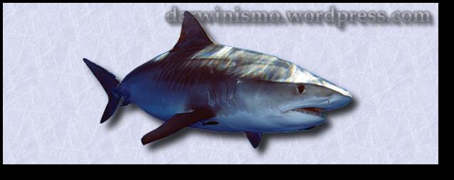 Tubarão2