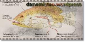 Peixe_1