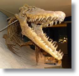Dinossauro_Mosassauro