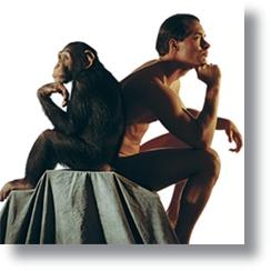 Chimpazes_Humanos