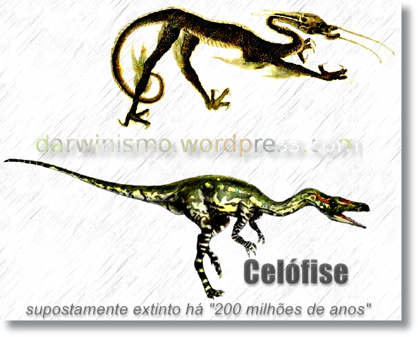 Dinossauro_Chines_Comparacao