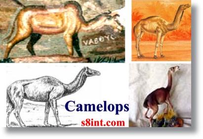 Dinossauro_Camelops