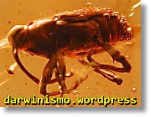 insecto_ambar
